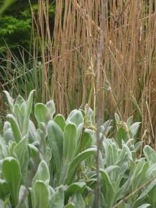 Lychnis & Calamagrostis