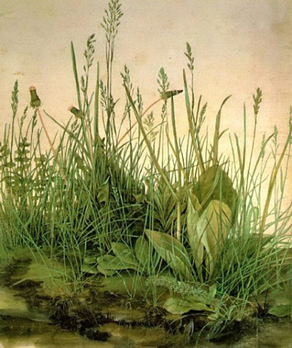 De grote graszode Albrecht Dürer