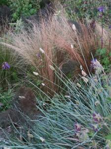 Sesleria en Carex
