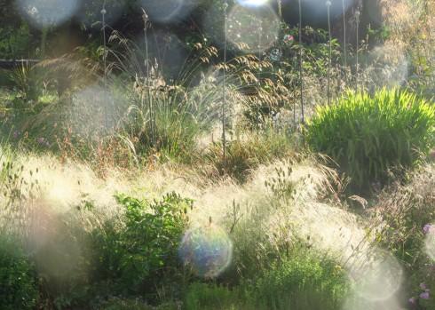Stipa sunflare