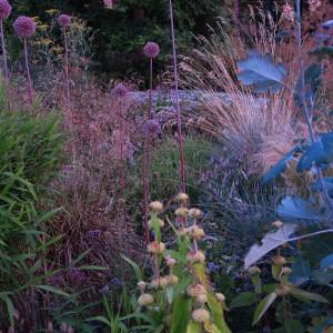 Alliums&Phlomis