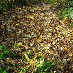 Honingboom gevallen blad
