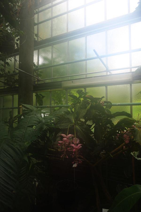PlantentuinGent1
