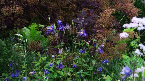 tuin eind mei_11