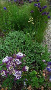 tuin eind mei_2