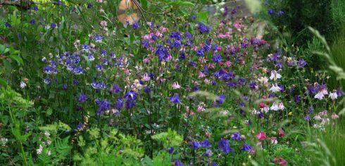 tuin eind mei_9